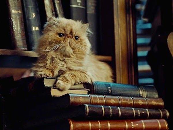 Pattenrond - Harry Potter